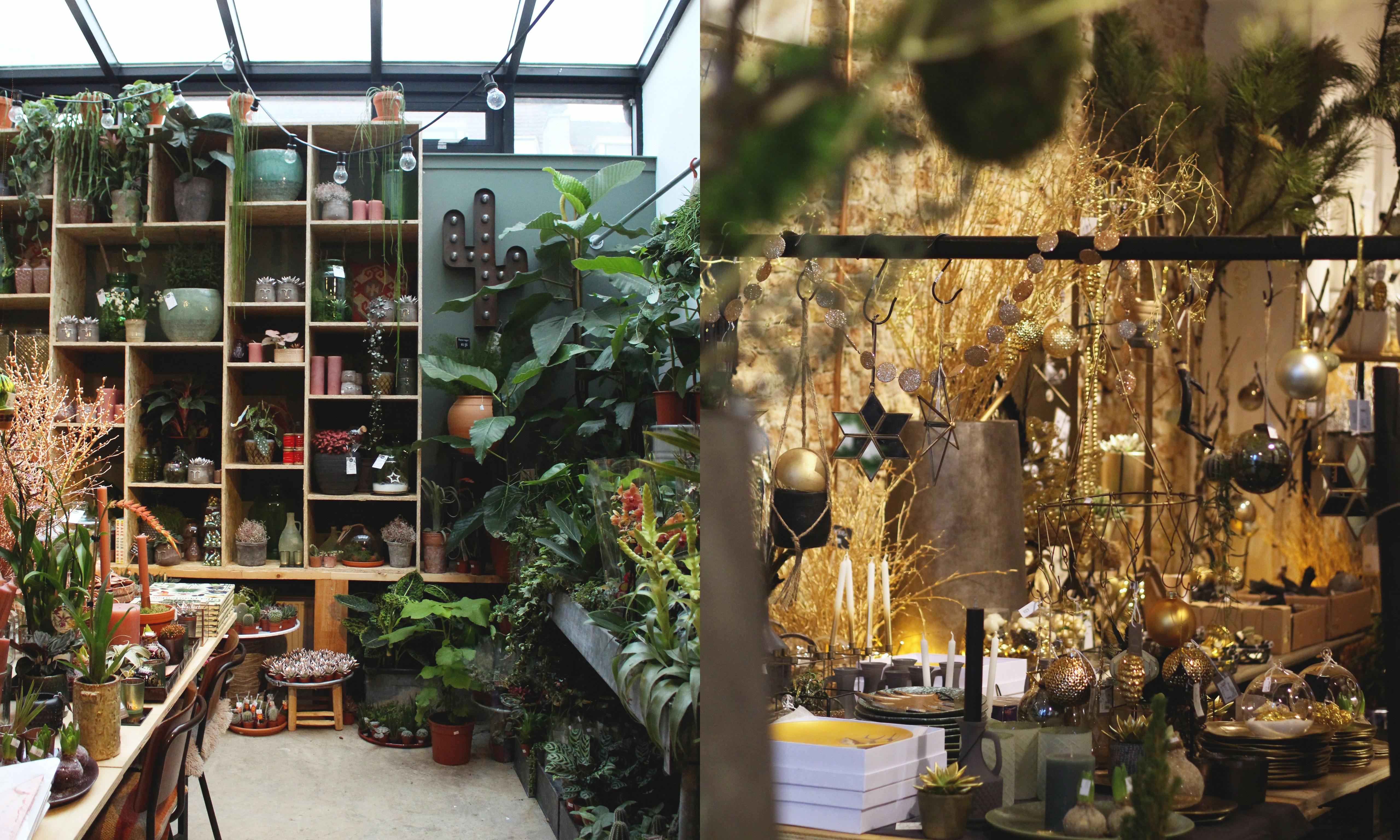 Plantenwinkel Groene Vingers in Delft