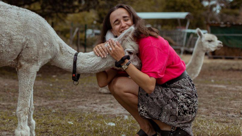Knuffelen met de liefste alpaca's in de buurt van Brussel