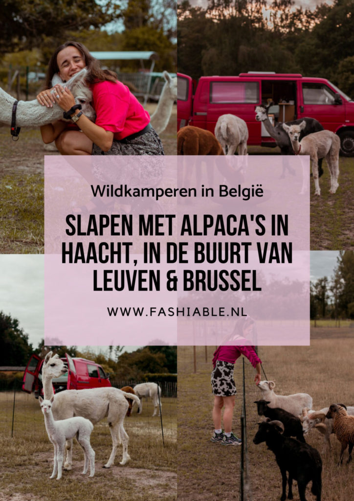 Slapen met alpaca's in Haacht, België