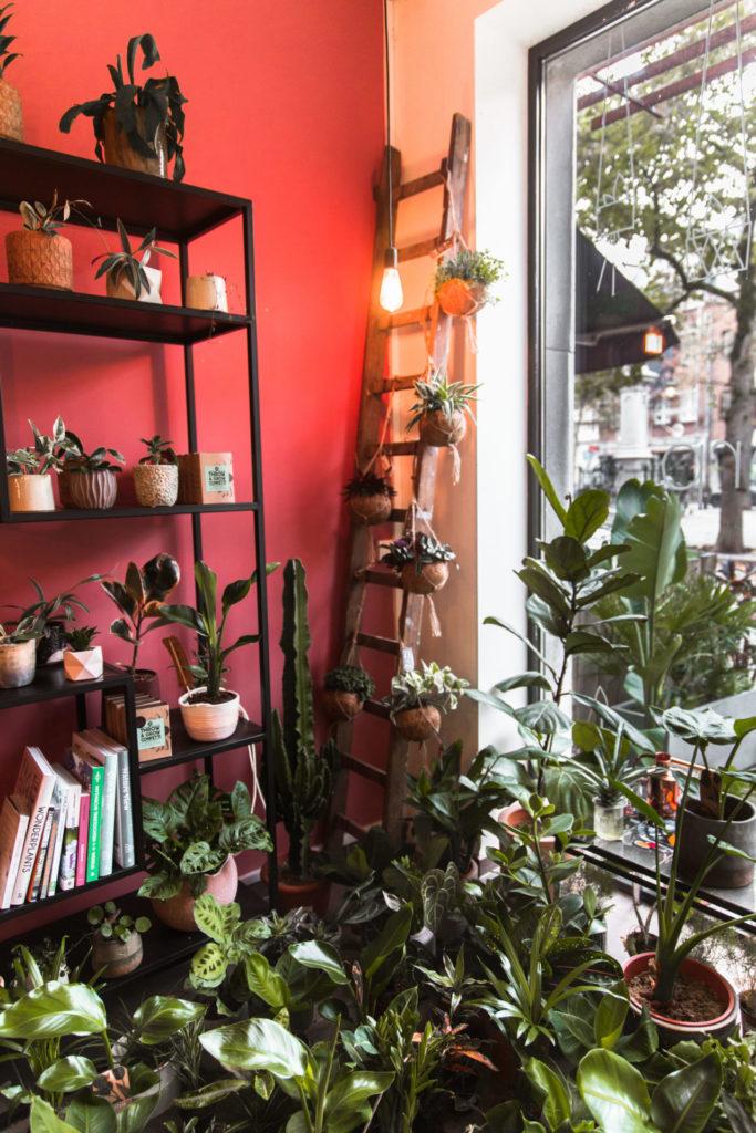 Bijzondere plantenwinkel in het centrum van Antwerpen