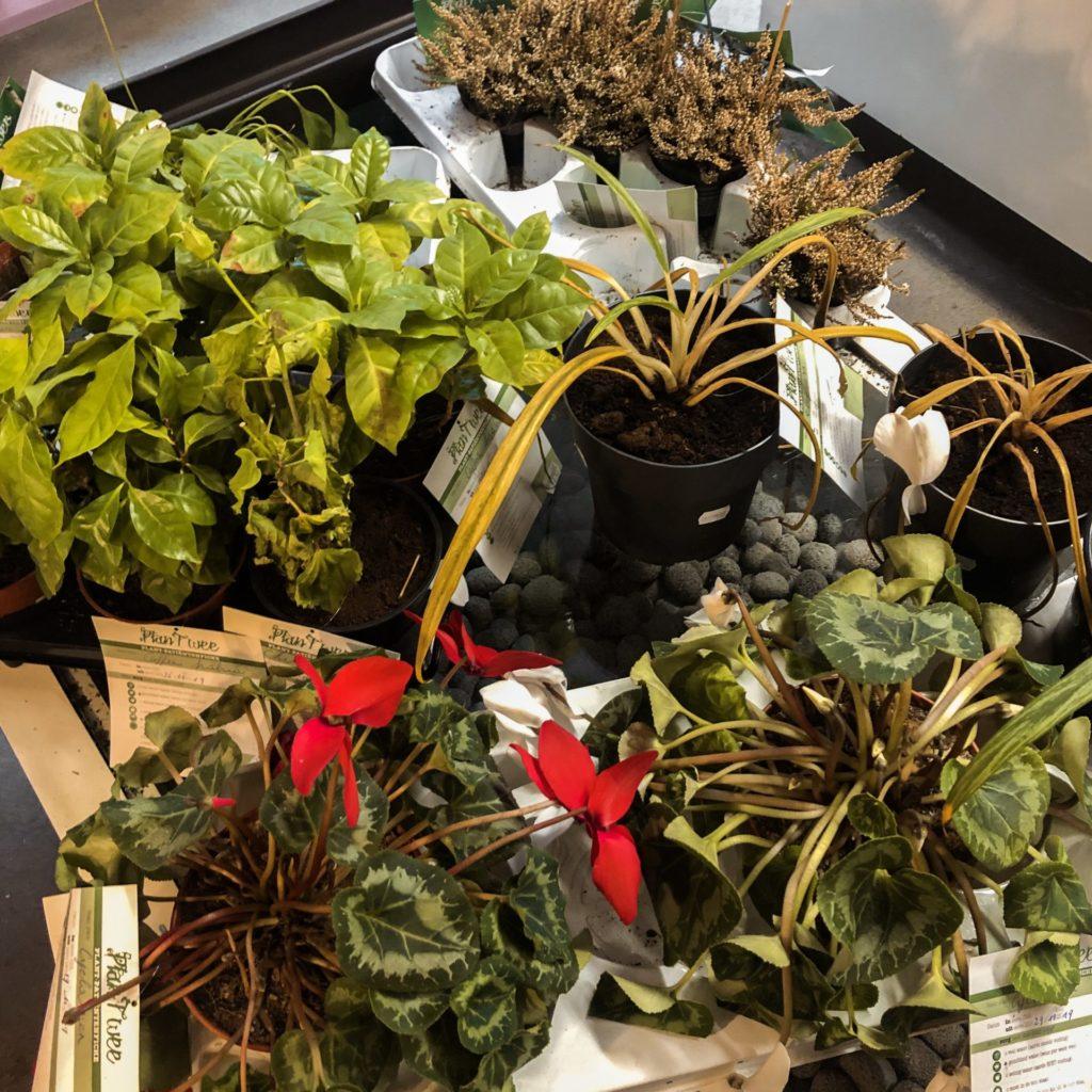 Planten kopen bij deze kringloopwinkel in Antwerpen