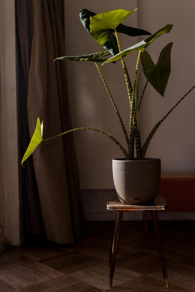 Originele cadeautip voor hem of haar: een bijzondere kamerplant