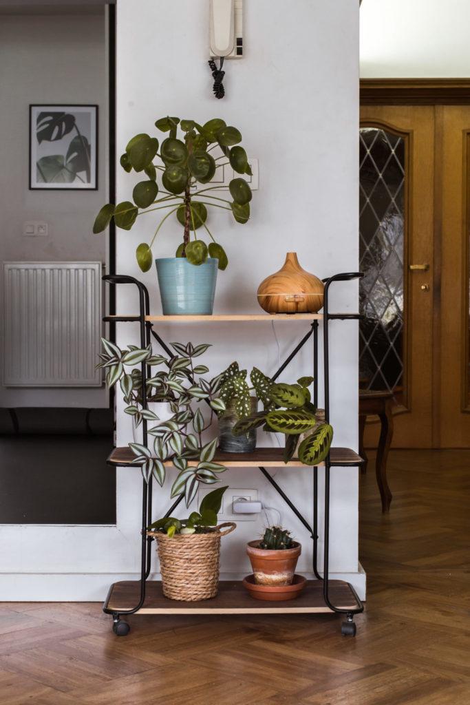 Een verzameling planten in ons huisje