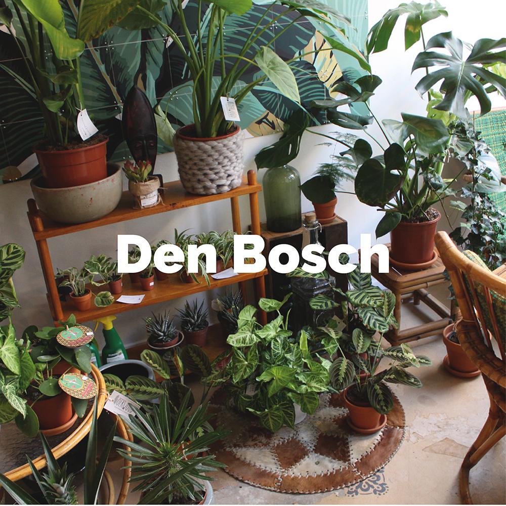 Ontdek alle hotspots in Den Bosch