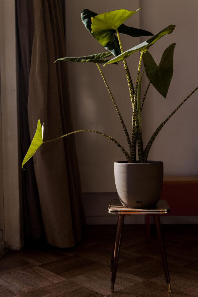 Woontrends in 2021 - Botanisch interieur